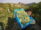 Missione negli USA per i vini Frascati
