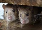 Torrevecchia, topi in scuola e mensa: Codacons lancia il foto-contest