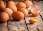 Le plastiche biodegradabili saranno fatte con i gusci d'uovo