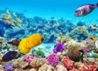 Australia, Grande Barriera Corallina in pericolo: a rischio 93% ecosistema