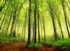 La Terra è più verde di 30 anni fa, ma è colpa dell'anidride carbonica
