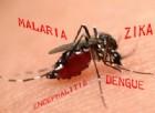Zika, si rischiano danni cerebrali autoimmuni simili alla sclerosi multipla