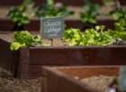 Verdure «tech» su Marte per coltivare meglio sulla Terra