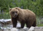 Una donna partorisce in un bosco circondata dagli orsi