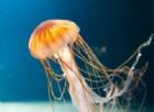 Rimedi sintomi e cure per le punture di medusa