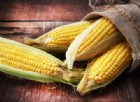 Fibra di mais solubile per ossa forti e sane nelle donne giovani e anziane