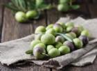 Polifenoli dell'olivo: gli antiossidanti naturali che frenano l'invecchiamento