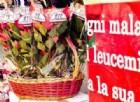 A Natale regala una Stella, ma che sia dell'Ail. Torna nelle piazze d'Italia la manifestazione per la ricerca sulla leucemia, dall'8