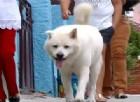 Ecco Thor, il cane rimasto solo che ogni giorno ripercorre la passeggiata che faceva con il padrone