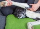Cani anziani: gli esercizi e le terapie che li aiutano a stare meglio