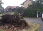 Un albero sradicato durante il maltempo