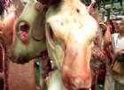 Torna l'incubo mucca pazza in Italia: un caso a Padova