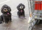Animali al supermercato: possono entrare. Bocciati i venditori del Veneto