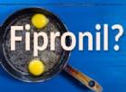 Uova con Fipronil, quello che devi sapere