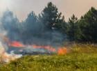 Un incendio boschivo