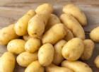 Allarme Fipronil: trovato anche nelle patate e nella pasta. Codacons: «Lorenzin si deve dimettere»