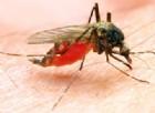 Giallo sulla morte per malaria di una bimba di 4 anni a Trento