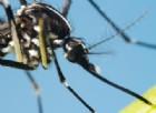 Ora c'è anche la Dengue: scatta l'allarme a Rossano Veneto per un contagio