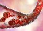 Antidiabetici: proteggono le staminali ripara-vasi scongiurando danni cardiovascolari