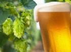 La birra previene il cancro. Lo studio