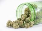 Cannabis legale: tutti i benefici per la salute