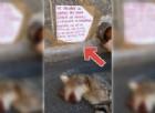 L'animale ucciso e abbandonato in strada
