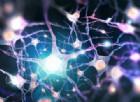 Ecco come i neuroni «parlano» tra di loro. La sorprendente ricerca italiana