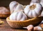 Infezioni da batteri resistenti agli antibiotici, nell'aglio l'arma per combatterle