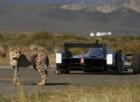 Chi l'ha detto che le auto elettriche vanno piano? La Formula E sfida un ghepardo!
