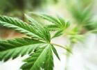 Bimbo di 20 mesi finisce in ospedale per intossicazione da cannabis