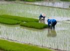 Il riso insanguinato della Birmania sulle nostre tavole