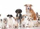 Test del DNA e cani: cosa si può scoprire?