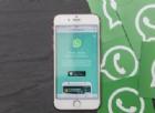 WhatsApp Business è realtà: così le PMI possono chattare con i clienti