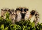 Paura dei ragni e altre fobie: nascono insieme a te
