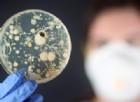 Oms, è allarme sulla resistenza dei batteri agli antibiotici. La situazione in Italia