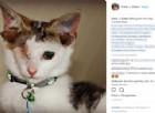 Vi presentiamo Frankie, il gattino con 4 orecchie che dispensa gioia alle persone che incontra
