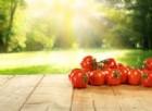 Nasce in Italia il pomodoro 'bronzeo' che combatte le infiammazioni intestinali croniche