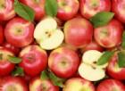 Chemioterapia, la mela annurca evita la caduta dei capelli