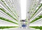 Questa startup sta costruendo la fattoria «idoor» più tecnologica al mondo