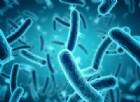 Sviluppato un nuovo antibiotico che combatte la resistenza