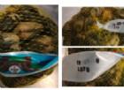 Escherichia coli nelle vongole veraci, ritirato dal commercio un lotto infetto