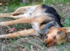 Cane «giustiziato»: animalisti sul piede di guerra, c'è anche una taglia