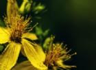 Ecco la pianta che potrebbe salvarci dall'HIV