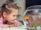 Tenere un acquario in casa potrebbe ucciderti. È accaduto a un'intera famiglia