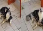 La polizia ritrova il cane scomparso grazie alla sua canzone preferita