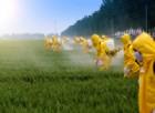 Attenzione ai pesticidi: il glifosato uccide le cellule umane