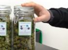Cannabidiol Distribution: alla scoperta della cannabis legale