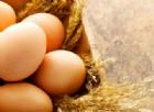Un uovo al giorno toglie l'ictus di torno, ma anche le altre malattie cardiovascolari