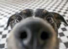 Diagnosi precoce del tumore ai polmoni. Sarà possibile grazie ai cani?