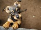 I cani potrebbero mettere l'umanità a rischio pandemie influenzali